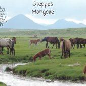 Mongolie 05
